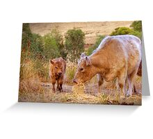 Mother and Daughter - Galloway Cows, Kanmantoo, Adelaide Hllls, SA Greeting Card