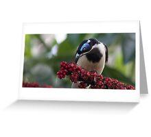 blue faced honey eater Greeting Card