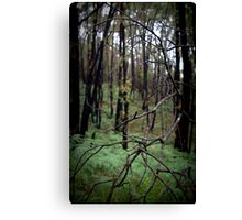 Stringy Bark Forest, Norton Summit Canvas Print