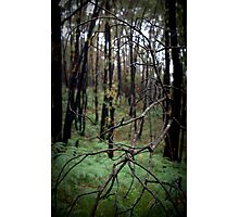 Stringy Bark Forest, Norton Summit Photographic Print