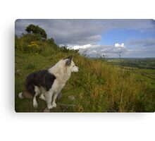 Dogs View Canvas Print