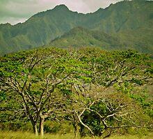 tropical Hawaii (series) by Angelika Sielken
