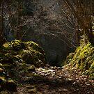 pathway in early morning light, Picos de Europa, Spain by Andrew Jones