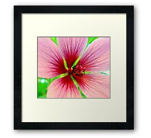 From the heart of Malvales Framed Print