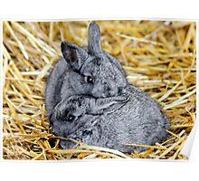 Snuggle Bunnies Poster