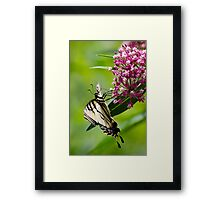 Beautiful Swallowtail Butterfly Framed Print