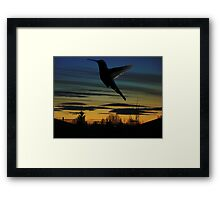 Evening Hummingbird Framed Print