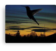 Evening Hummingbird Canvas Print