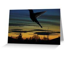 Evening Hummingbird Greeting Card