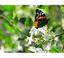 hope {apple blossom time} Photographic Print