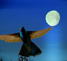Hummingbird Moon II by Al Bourassa