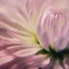Softness in Pink by yolanda
