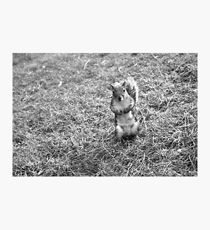 Dublin squirrel in black and white  Photographic Print