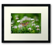Northern Crescent Butterfly Art Framed Print