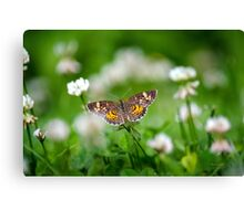 Northern Crescent Butterfly Art Canvas Print