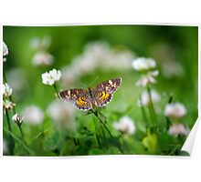 Northern Crescent Butterfly Art Poster