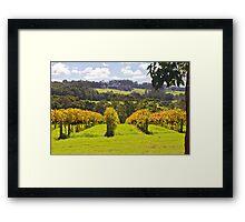 Ricketty Gate Vineyard Framed Print