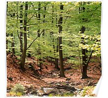 Beech forest on a fine spring day Poster