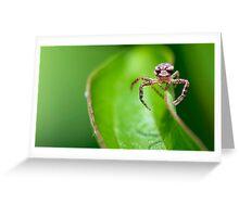 Balancing Spider macro Greeting Card
