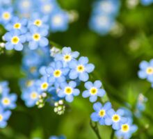 Nature Abstract Wildflowers Forget me nots Sticker