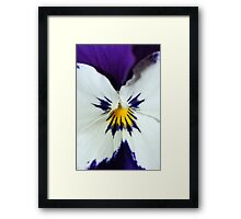 Purple Blue and White Pansy Macro Framed Print
