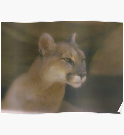 Mountain Lion 2 Poster