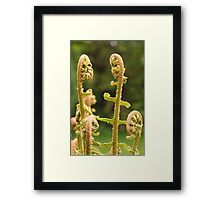 The Ferns Framed Print