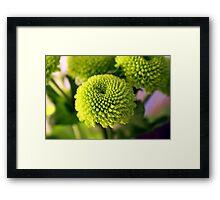 Mini Topiary Framed Print