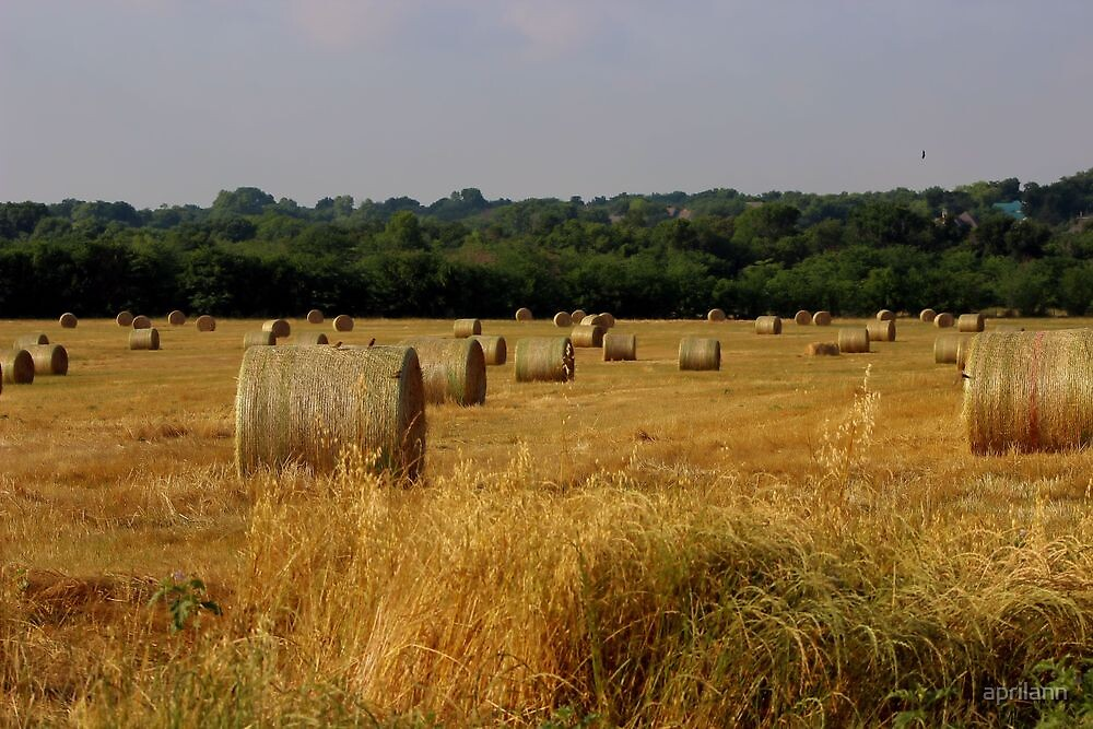 Texas Hayfield - Daily Homework - Day 12 - May 19, 2012 by aprilann