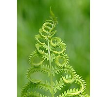 Dance Of The Fern Photographic Print