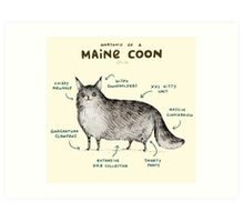 Anatomy of a Maine Coon Art Print