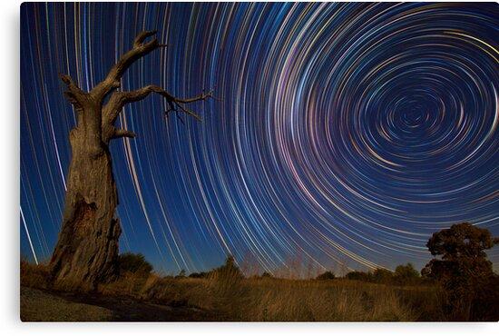 Dead Tree Stars II by Lincoln Harrison