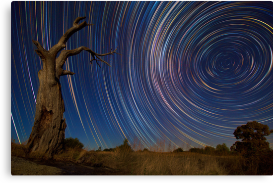 Dead Tree Stars II by Lincoln Harrison