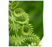 Fern Leaf Detail Poster
