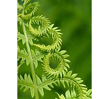 Fern Leaf Detail Photographic Print