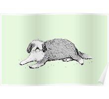 Old English Sheepdog Poster