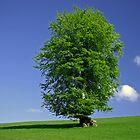 Devon Tree near East Ansty by peteton