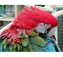 32 - PARROT - DAVE EDWARDS - 2012 Photographic Print