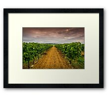 Cognac Vineyard Framed Print