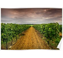 Cognac Vineyard Poster