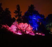 Colour Wheel (2) - Botanic Lights 2015 by Nik Watt