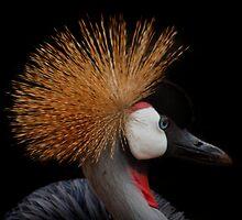 Crested Crane by Craig Higson-Smith