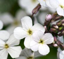White Wildflowers Sticker