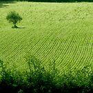 Green field in spring by bubblehex08