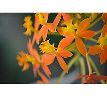 Simpsons Flower? Photographic Print