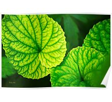 Green Leaf Abstract Art Poster