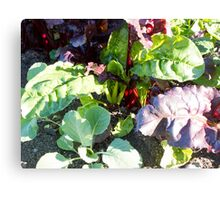 leafy vegetables Canvas Print