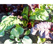 leafy vegetables Photographic Print