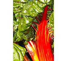 red stems Photographic Print