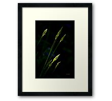 Grass Nature Abstract Framed Print